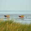 Cuxhaven, Morze Północne