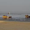Bryczki w Morzu Wattowym w czasie odpływu