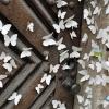 Das Schmetterlingshaus