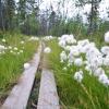 Szlak do trójstyku norwesko-fińsko-rosyjskiego