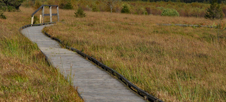 Ścieżki w parku Hohes Venn