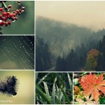 Jesień w górach Harzu