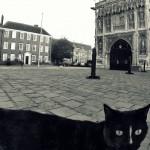 Kot z Canterbury przed Katedrą ;)