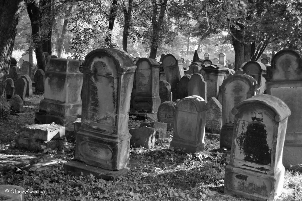 Macewy na żydowskim cmentarzu w Tarnowie