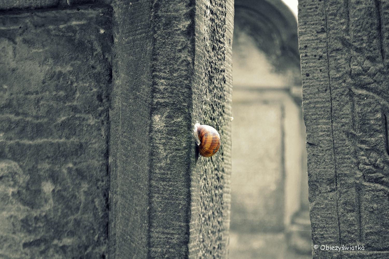 Na cmentarzu żydowskim w Tarnowie