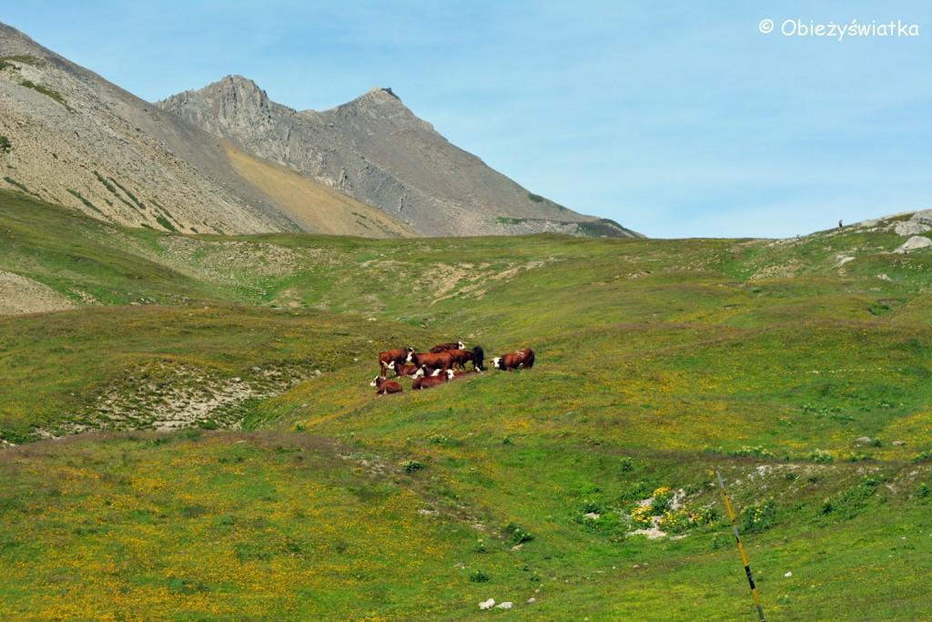 Przełęcz Col du Galibier - 2642 m n.p.m., Alpy, Francja