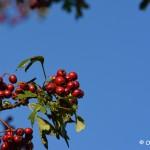 Ostatnie kolory jesieni