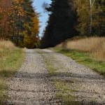 Ścieżkami przez jesienny las