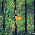 W jesiennym ogrodzie...