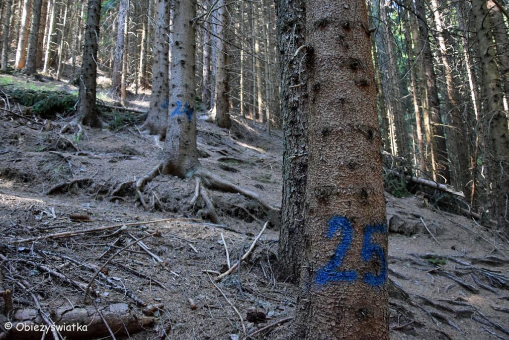 Zygzakiem w górę, numery na drzewach oznaczają serpentyny