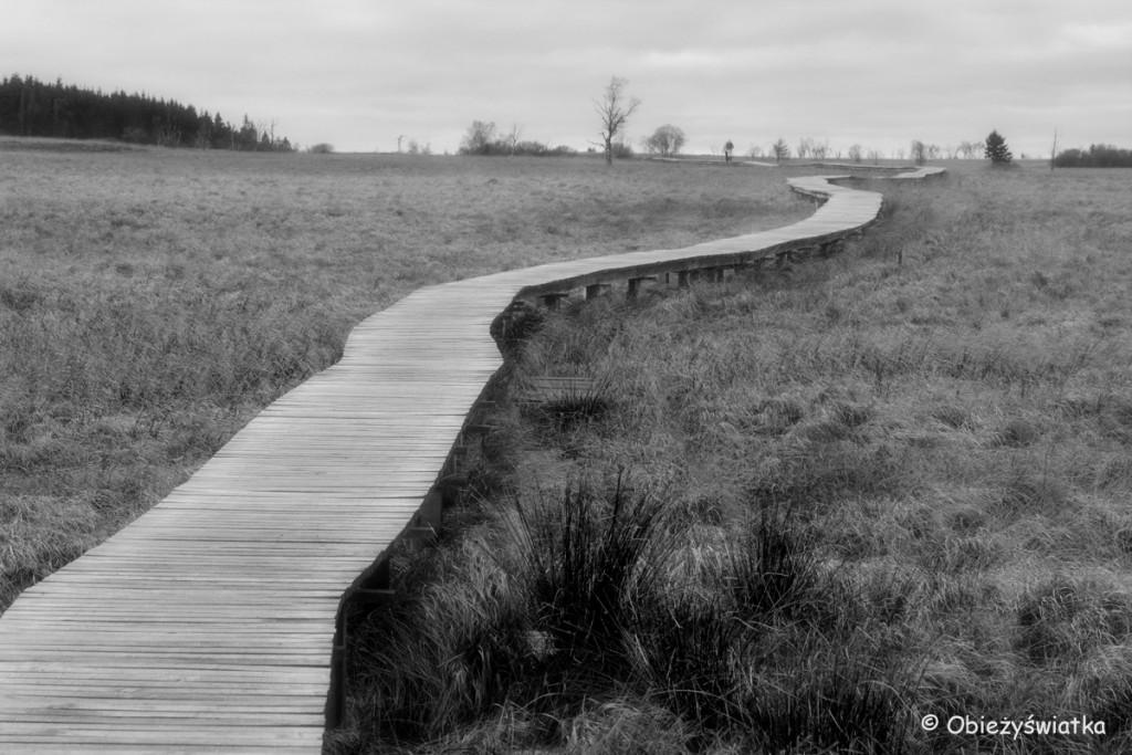 Ścieżki w nieznane, Hautes Fagnes/Hohes Venn - belgijski park krajobrazowy