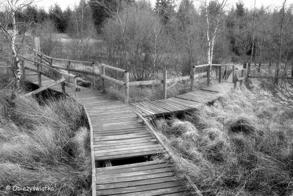 Po drewnianych kładkach przez wrzosowiska - Hautes Fagnes/Hohes Venn - belgijski park krajobrazowy