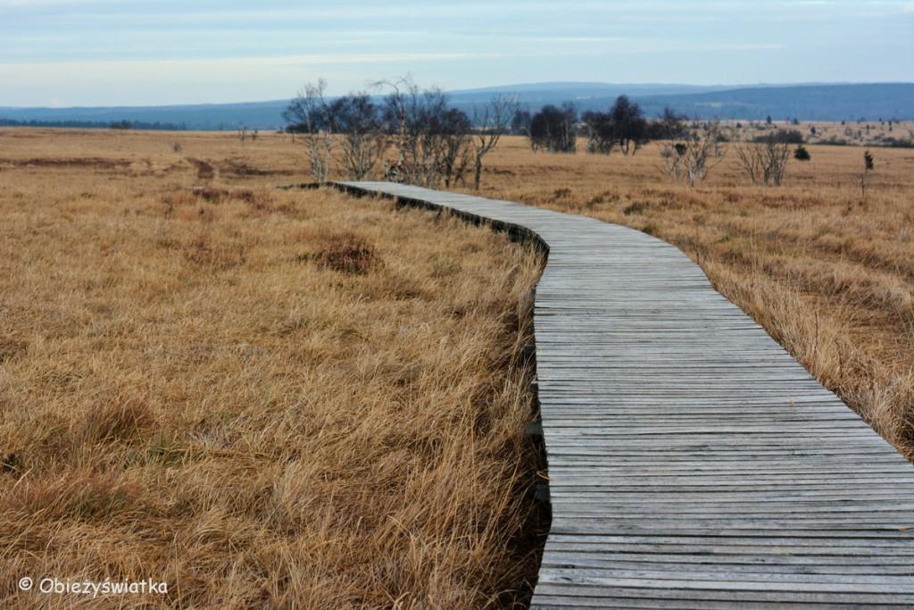 Ścieżki przez wrzosowiska i torfowiska, Hautes Fagnes/Hohes Venn - belgijski park krajobrazowy