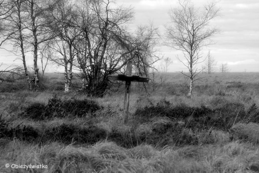 Stare krzyże można tu spotkać bardzo często....- Hautes Fagnes/Hohes Venn - belgijski park krajobrazowy