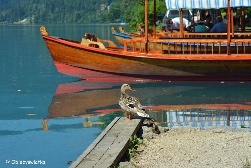Pletny na Jeziorze Bled, Słowenia