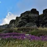 Wokół Tintagel Castle - skały i wrzosy