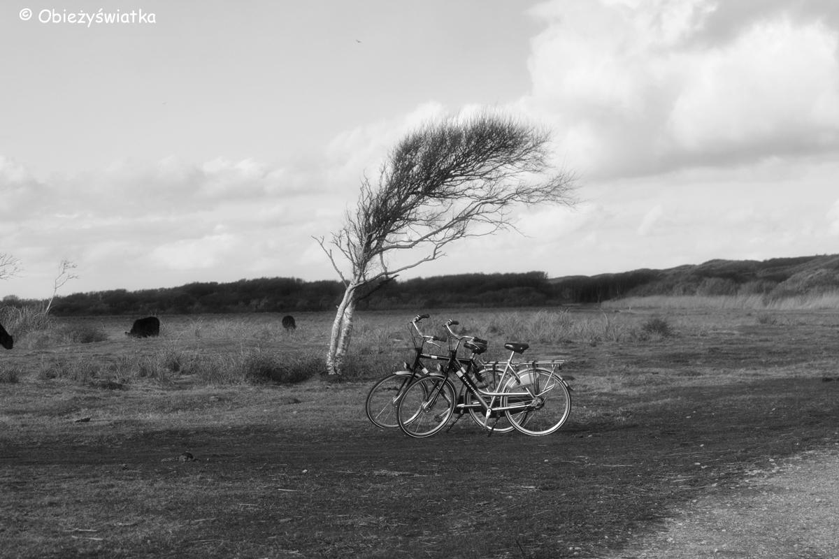 Na szlaku na wyspie Texel