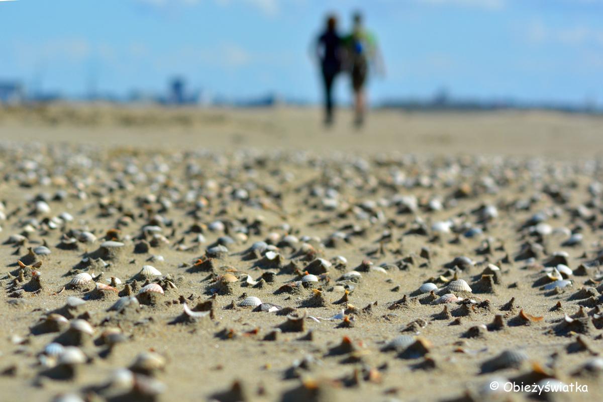 Na plaży na wyspie Texel
