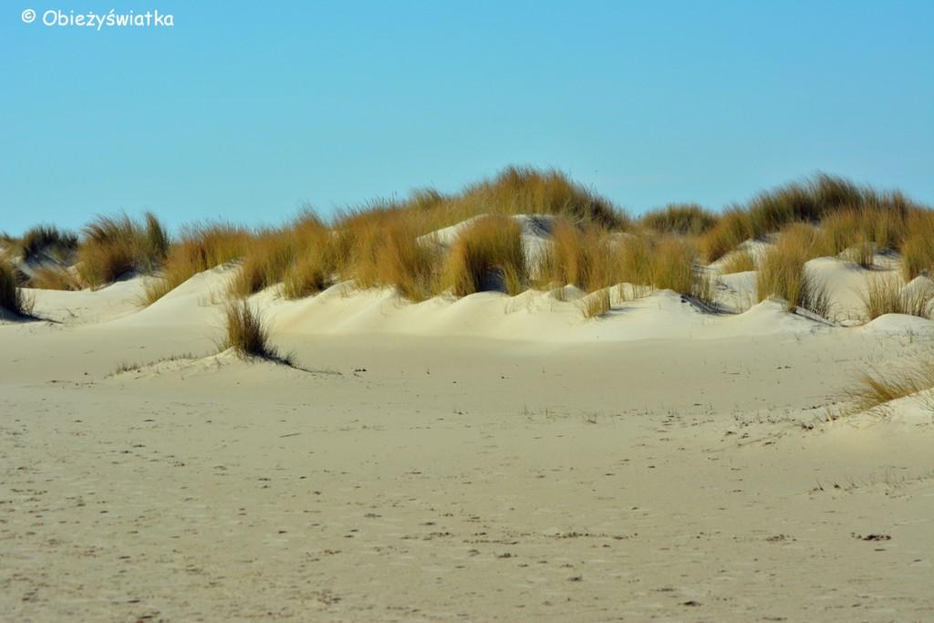 Wędrówka wśród wydm, Texel
