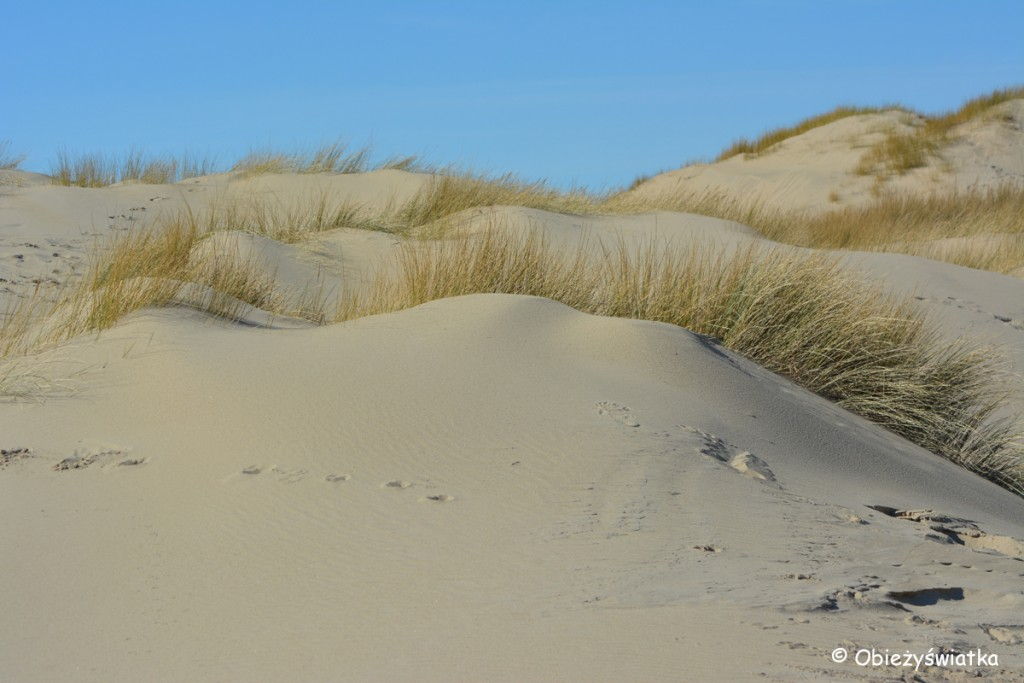 Wędrówka przez wydmy, Texel