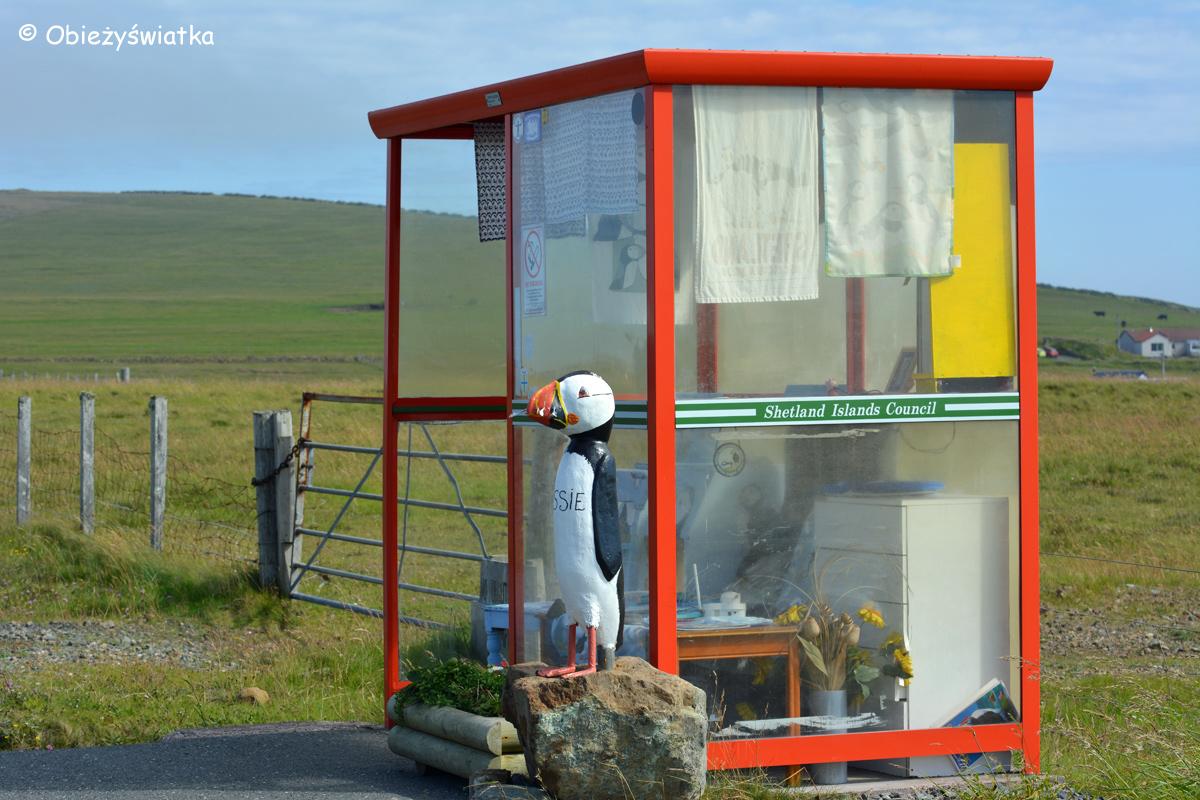 Unst Bus Shelter - oryginalny przystanek na wyspie Unst, Wyspy Szetlandzkie 2015