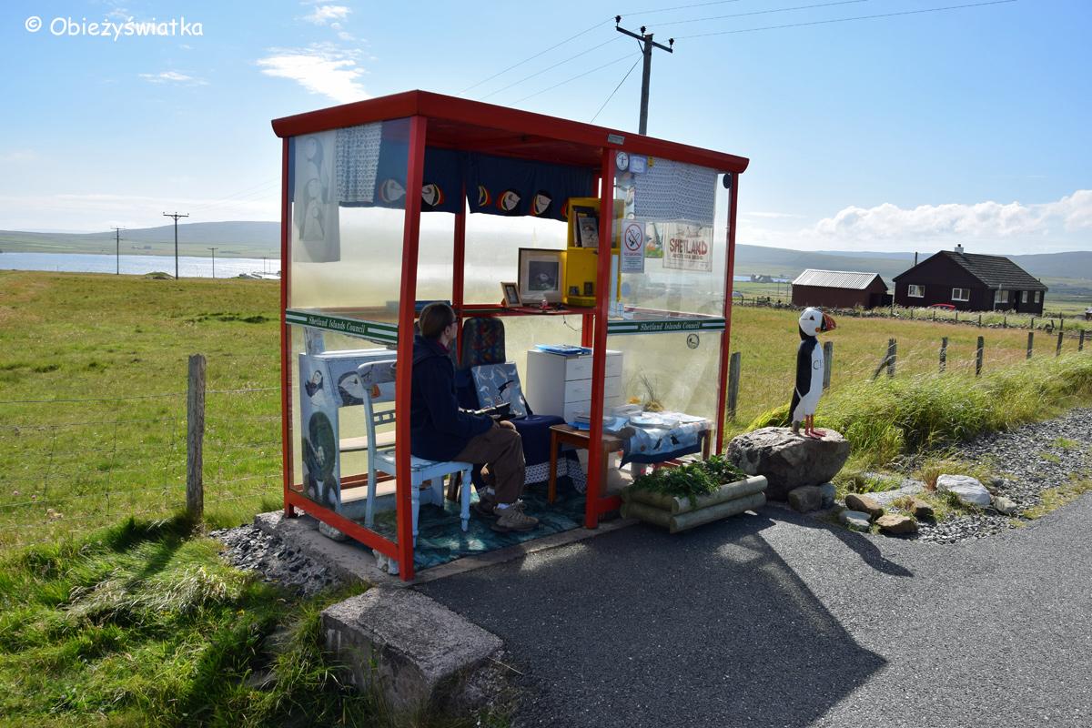 Unst Bus Shelter - czekając na przystanku w towarzystwie Cissie :), Wyspy Szetlandzkie 2015