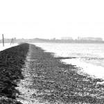 Wattenmeer 2009