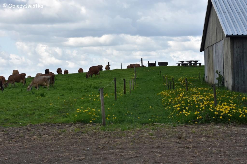 Møllehøj - najwyższy szczyt Danii