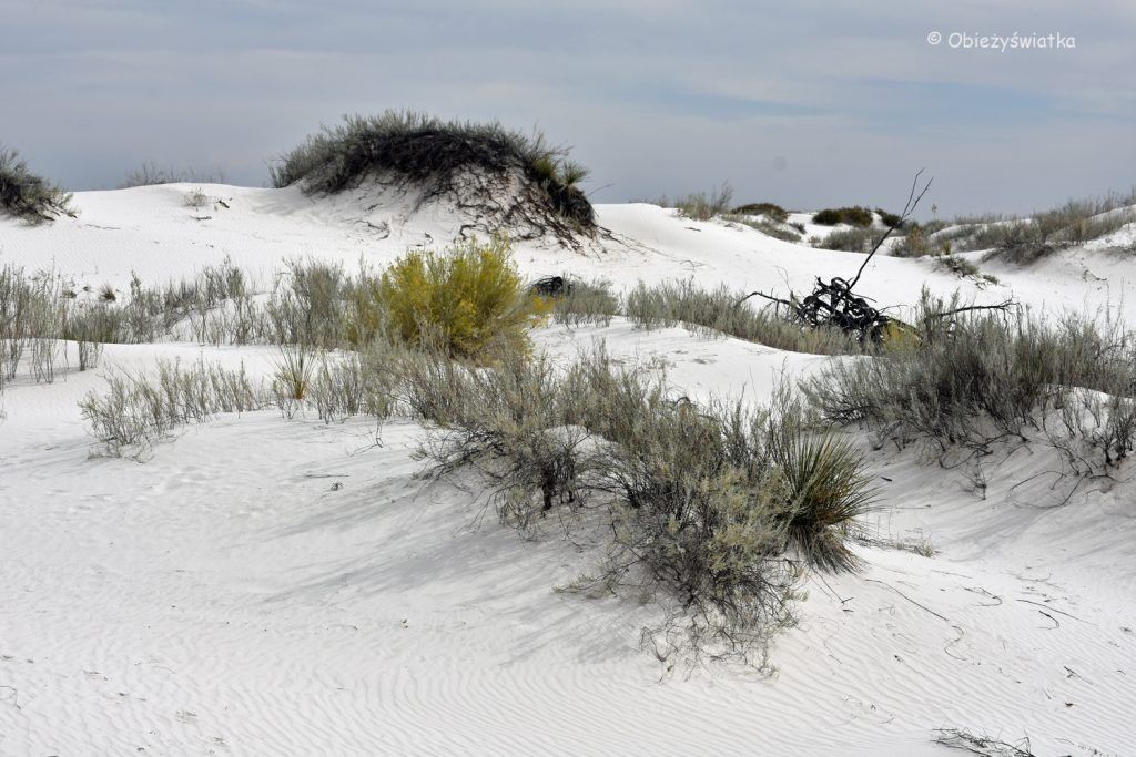 Pustynna roślinność, White Sands National Monument, USA