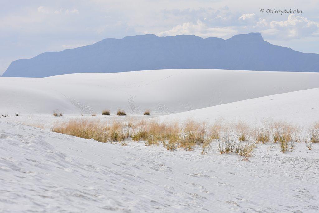 Wydmy i pustynna roślinność, White Sands National Monument, USA