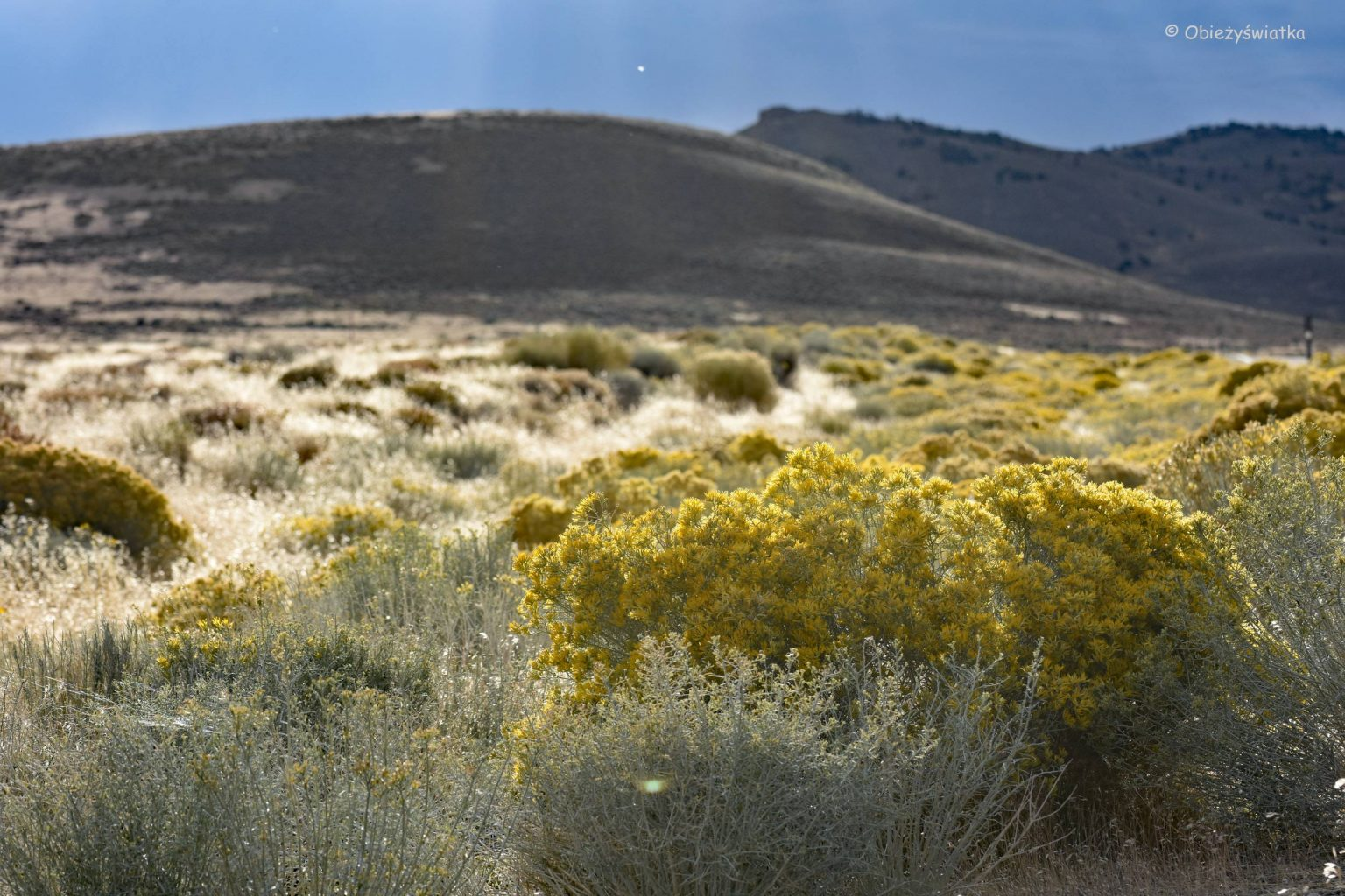 Sagebrush in Nevada