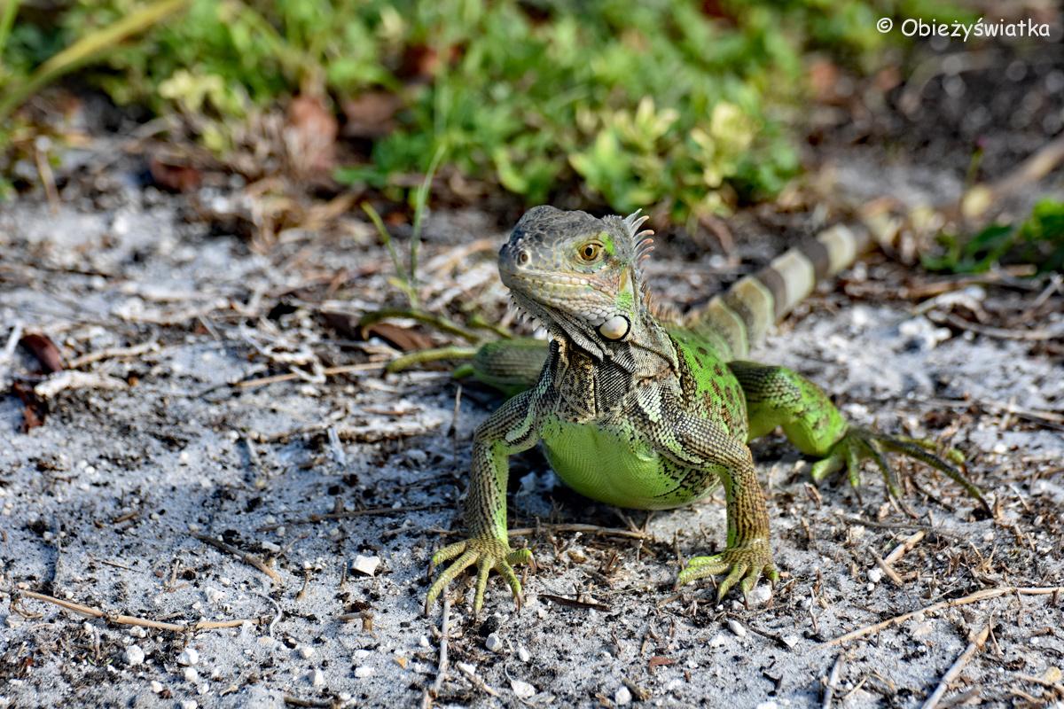 Kto pierwszy mrugnie okiem, przegrywa ;) / Key West