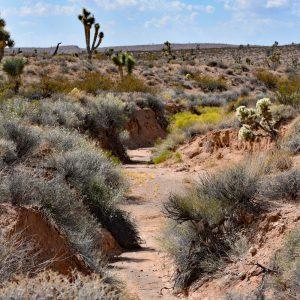Maszerując do trójstyku Nevada-Arizona-Utah