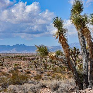 Krajobraz Arizony