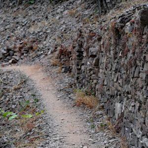 Wąska ścieżyna między winogronami - szlak na Calmont