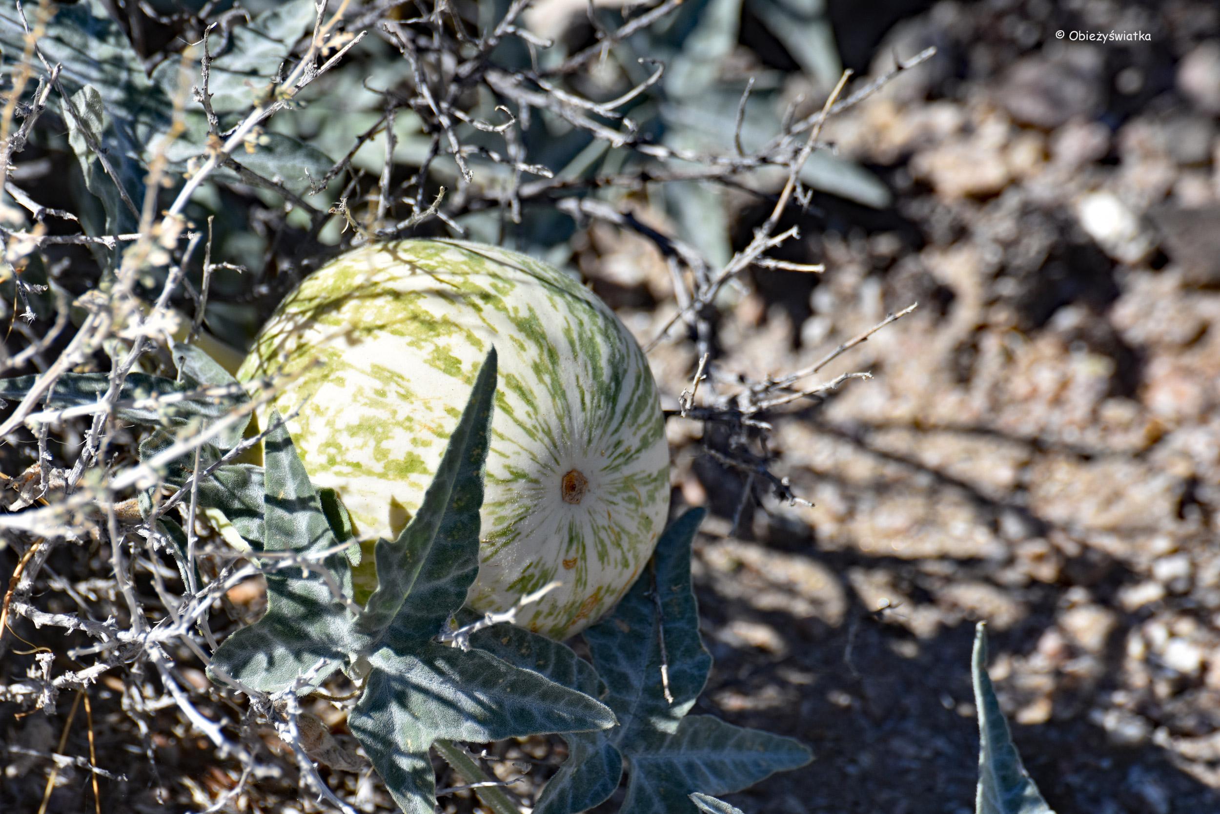 Znalezione na pustyni Mojave