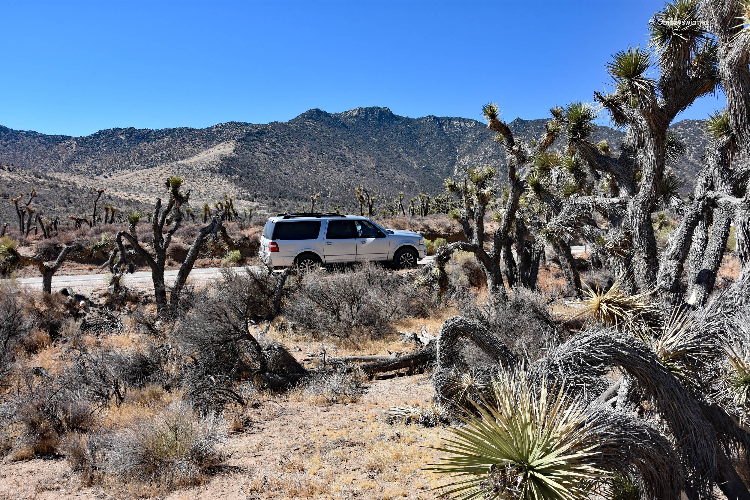 W drodze przez Pustynię Mojave