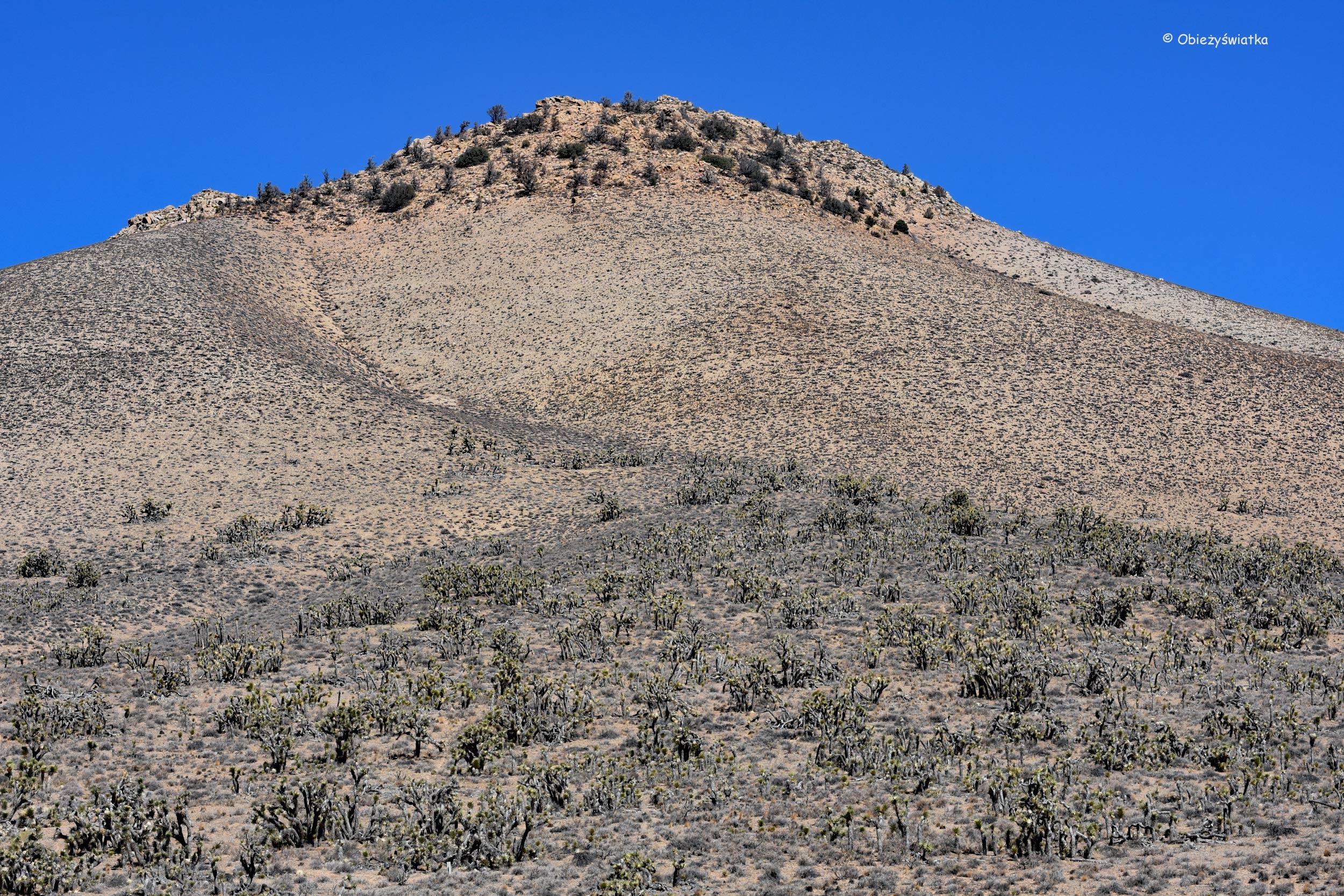Pustynia Mojave, USA