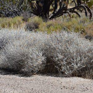 Wzdłuż drogi / Pustynia Mojave