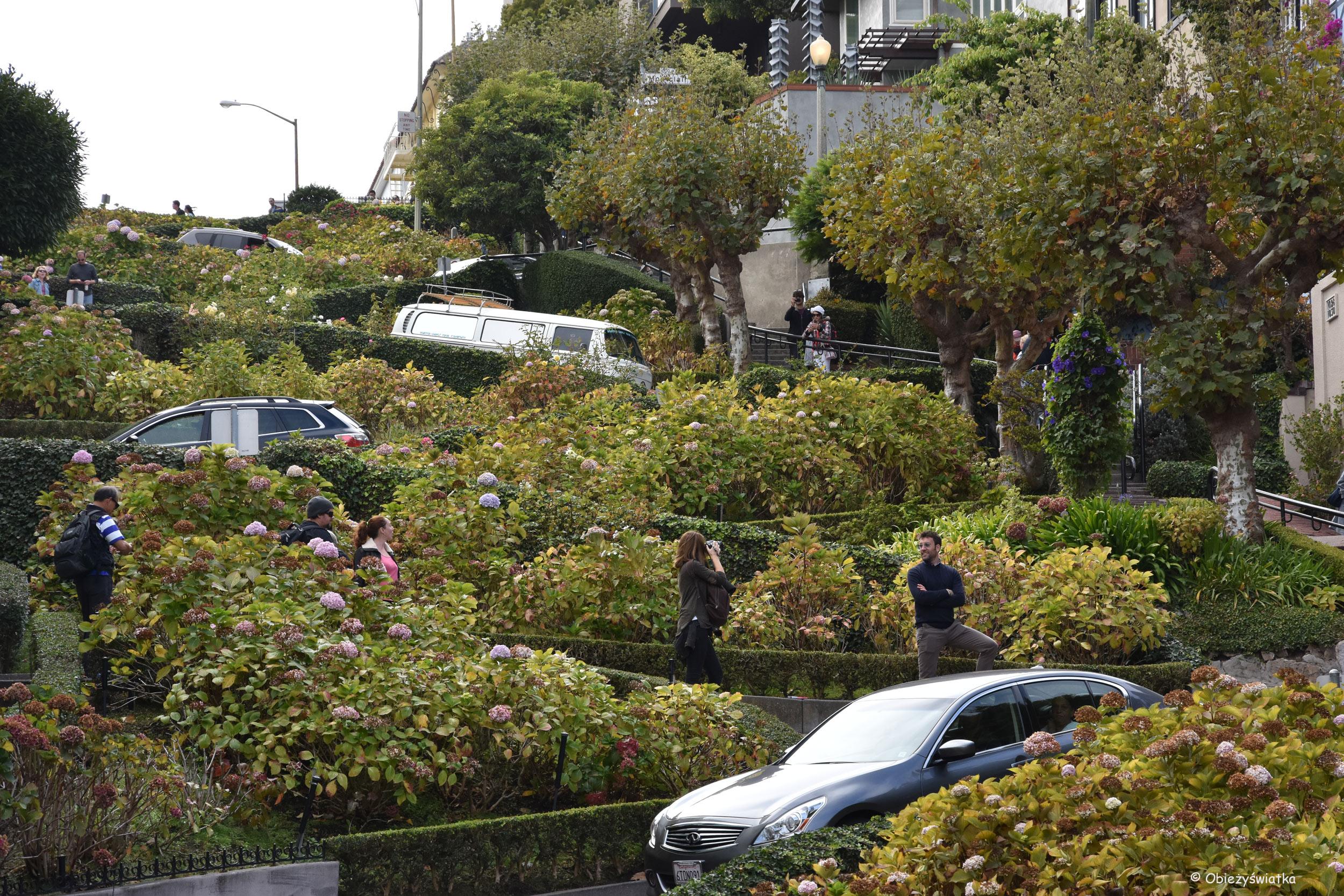 Lombard Street w San Francisco - 145 metrów, 8 zakrętów, nachylenie 16 procent, ruch jednokierunkowy w dół :)