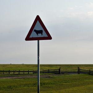 Tu rządzą owce - Hamburger Hallig