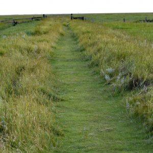 Ścieżka prowadząca przez słone mokradła