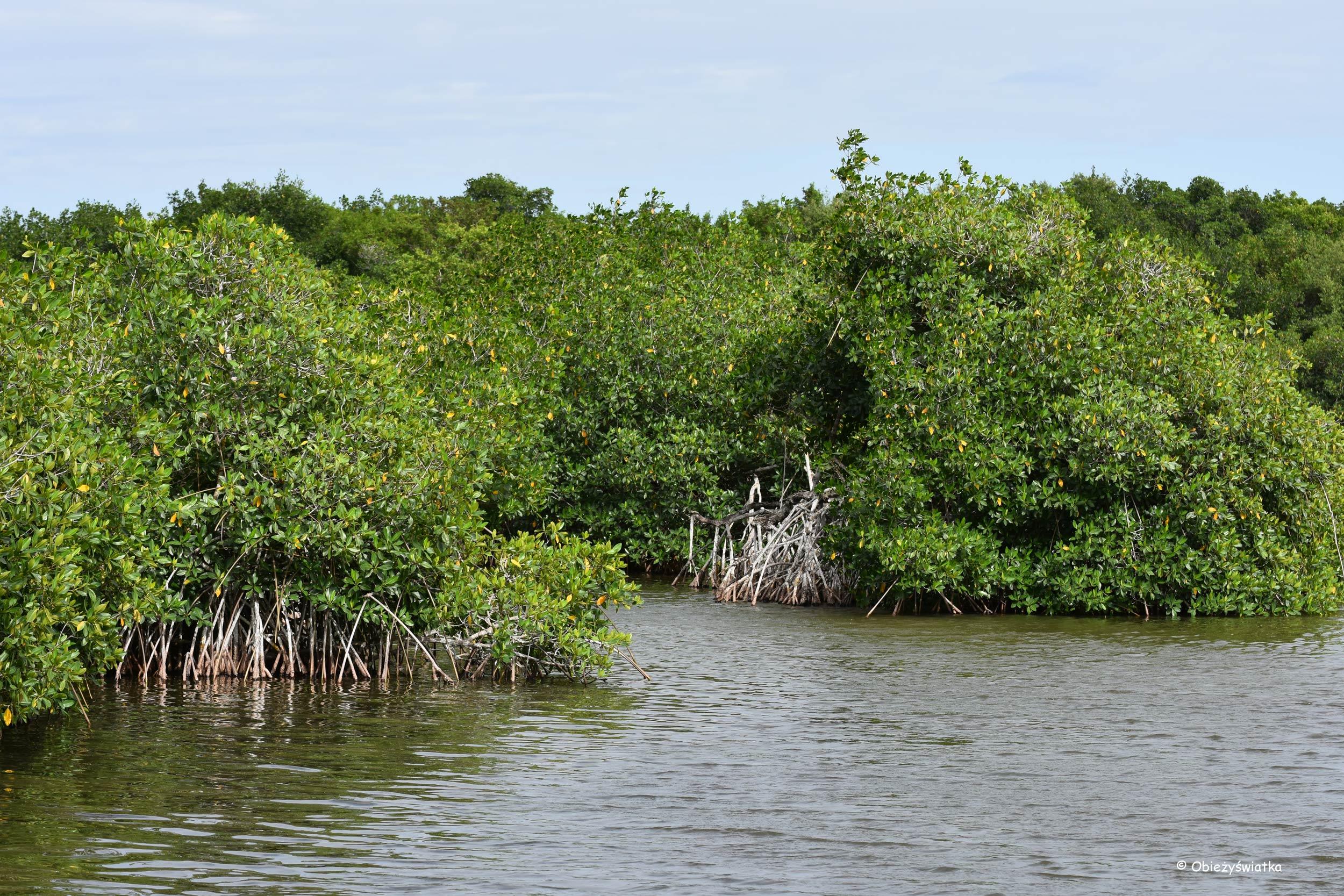 Everglades, Floryda