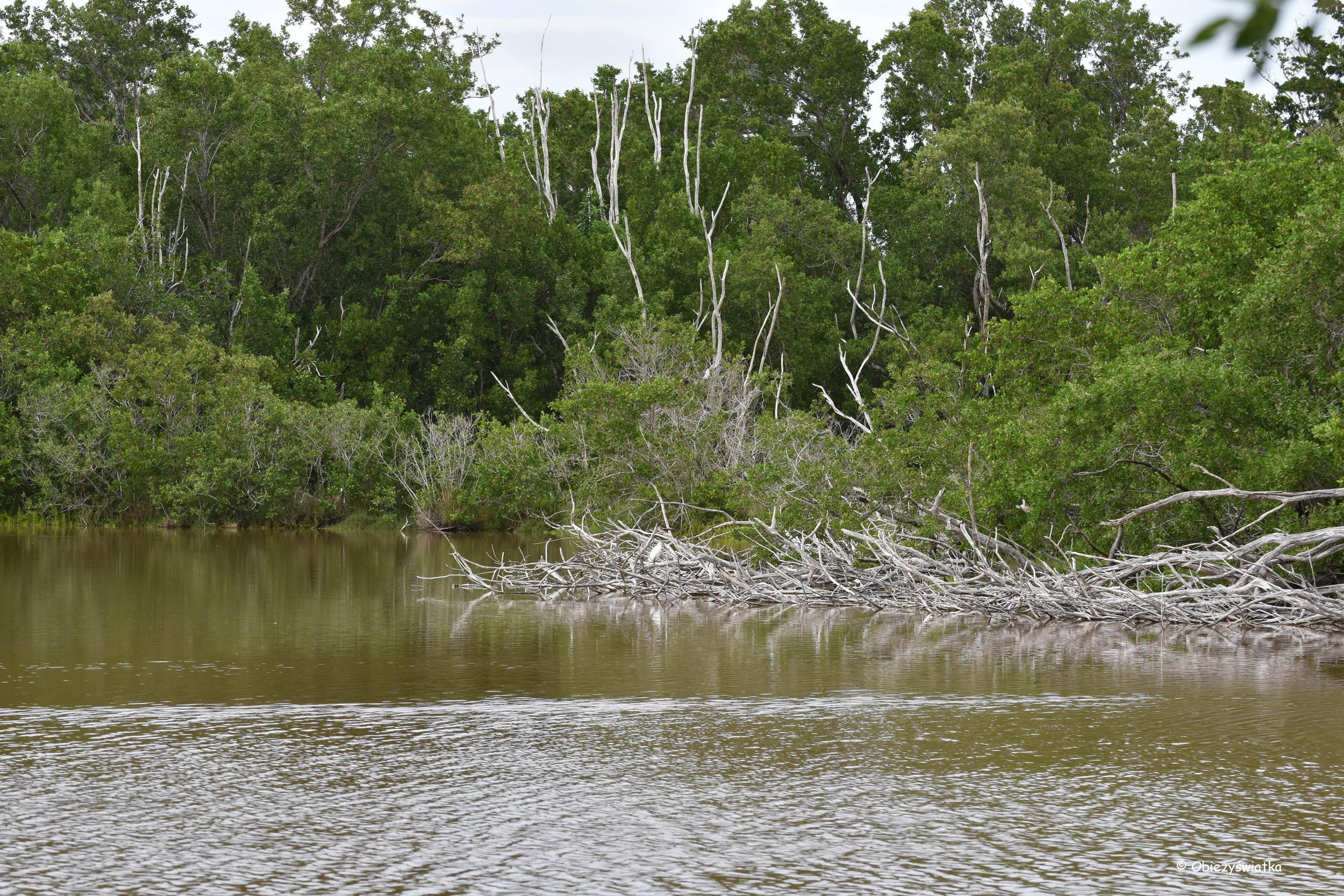 Park Narodowy Everglades, Floryda