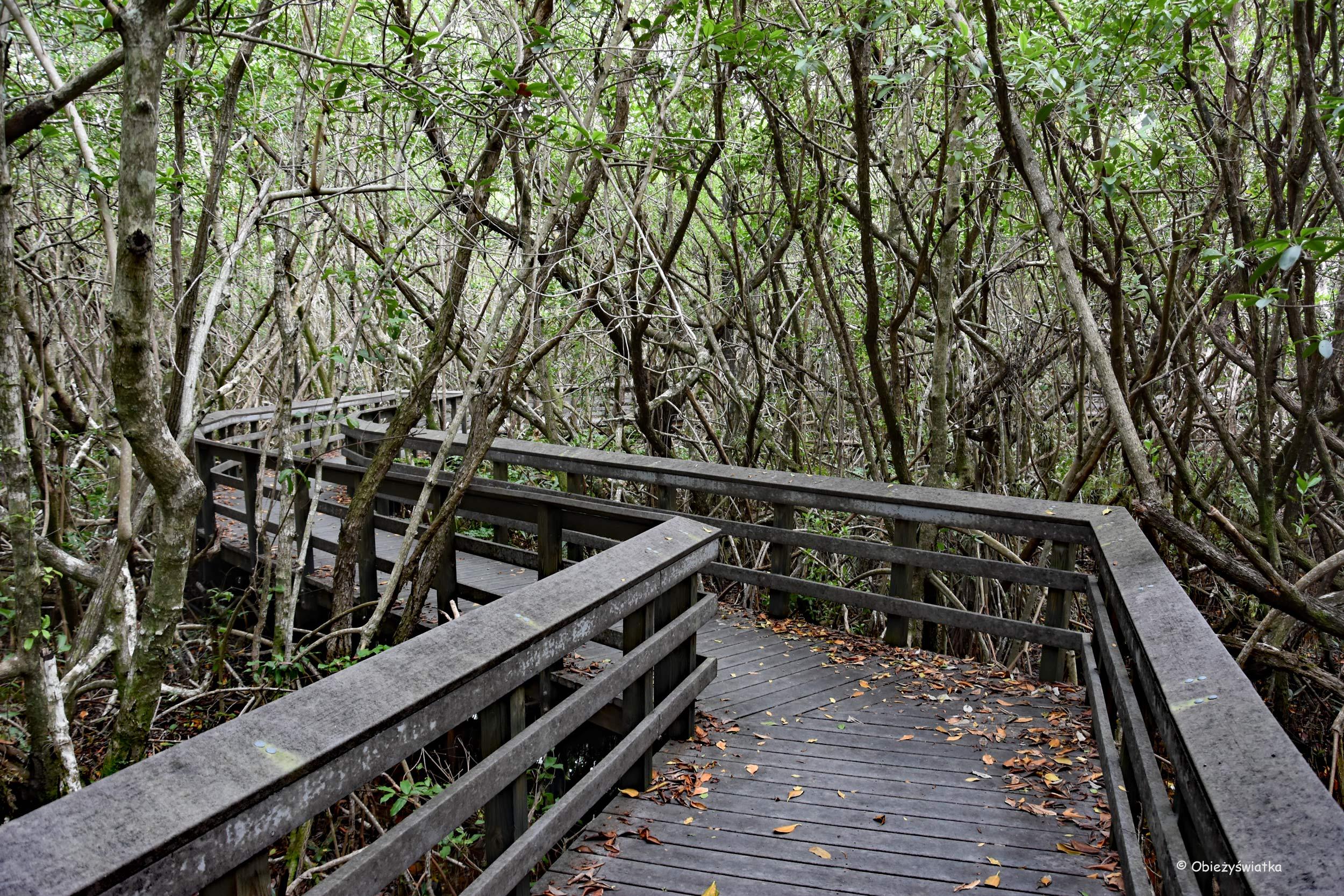 Mostkiem przez mangrowie - gorąco, wilgotno, ciemno