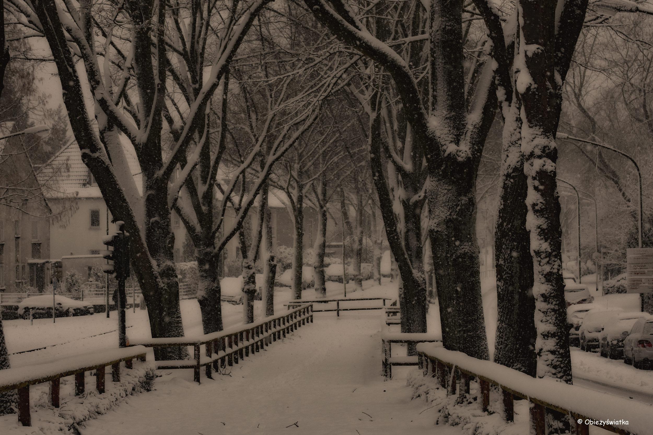 Śnieżna aleja