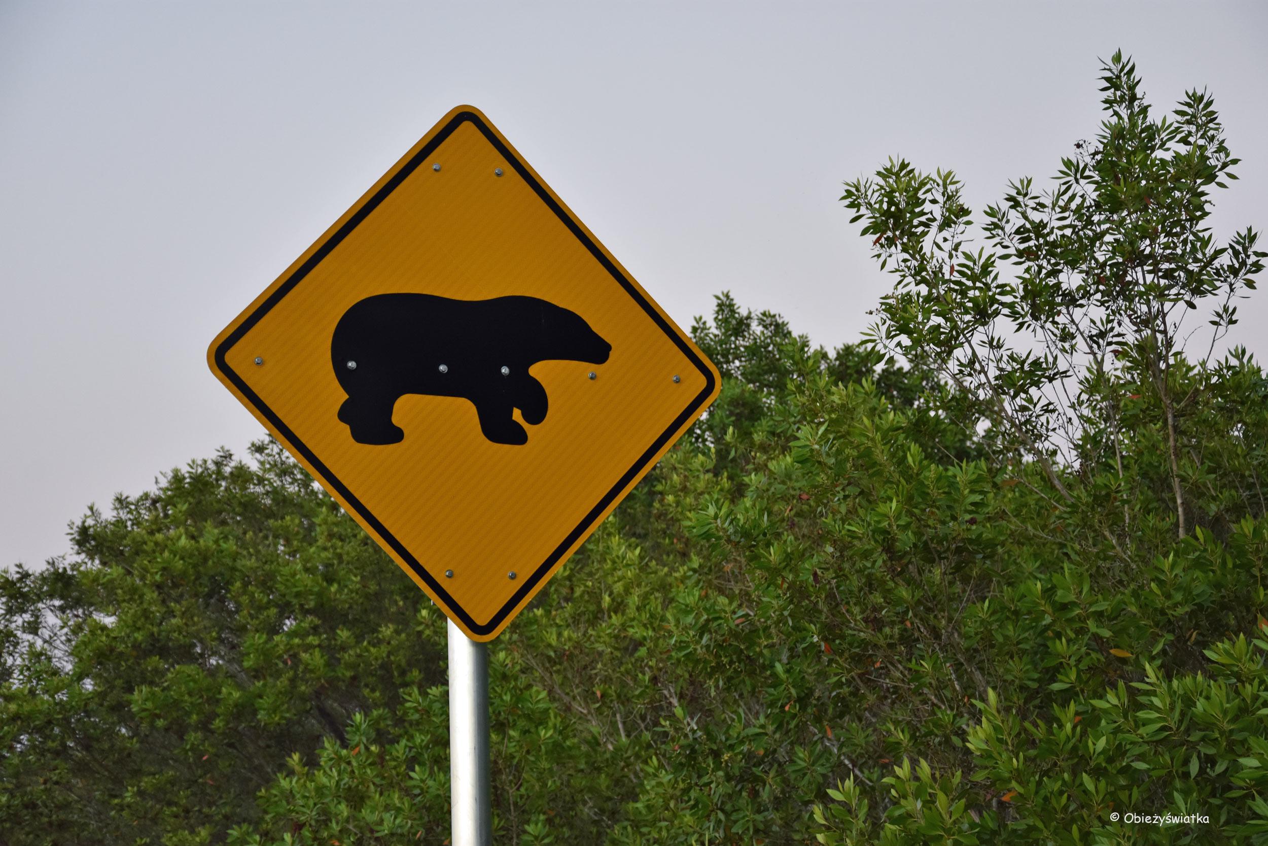 Uwaga na niedźwiedzie, Floryda