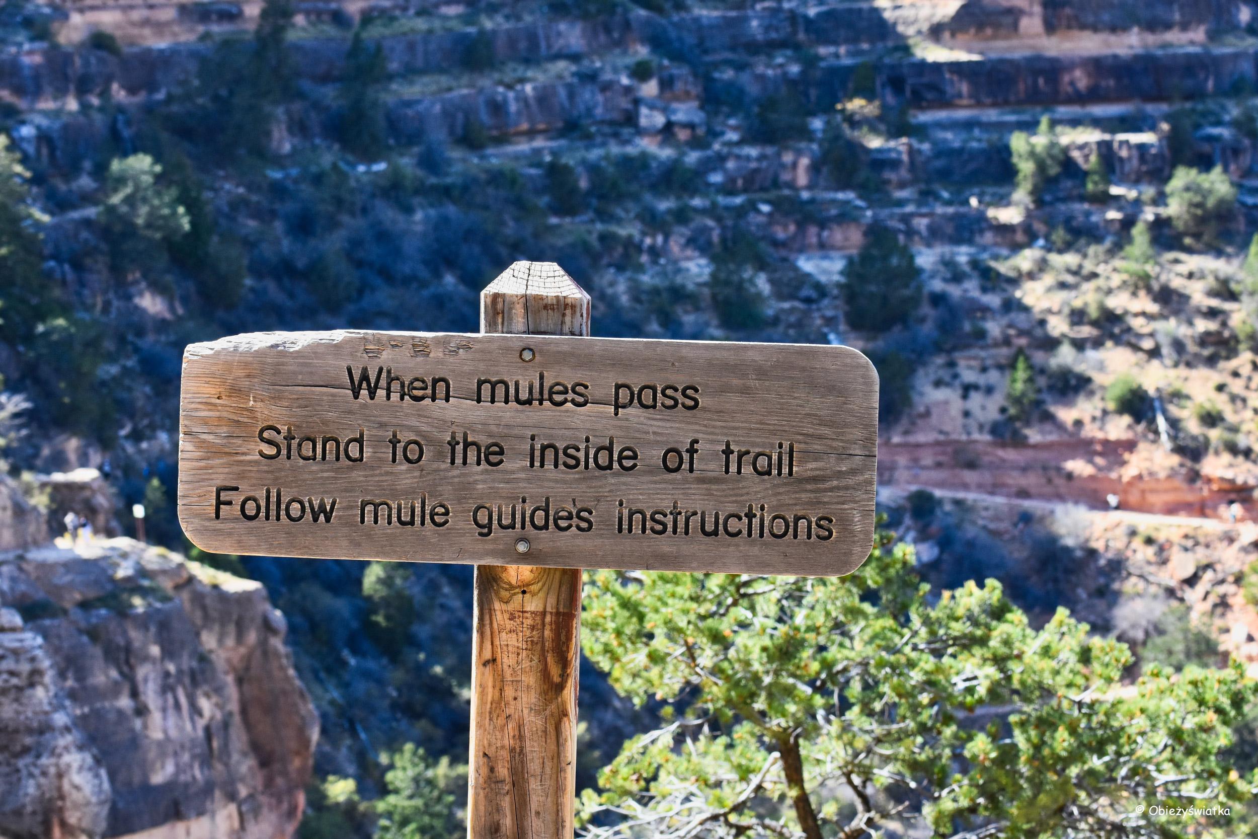 I wszystko jasne! - Grand Canyon National Park, Arizona, USA