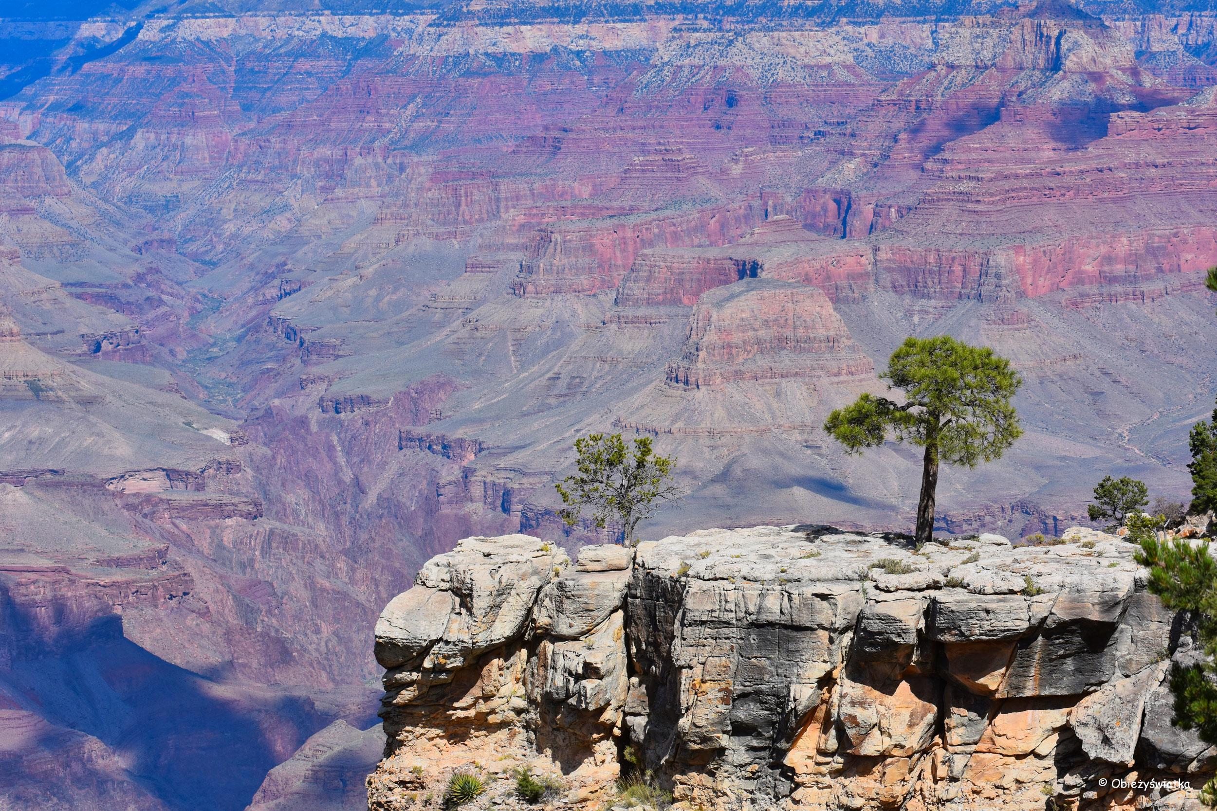 Nagie czerwone skały i samotne drzewka - Grand Canyon National Park, Arizona, USA