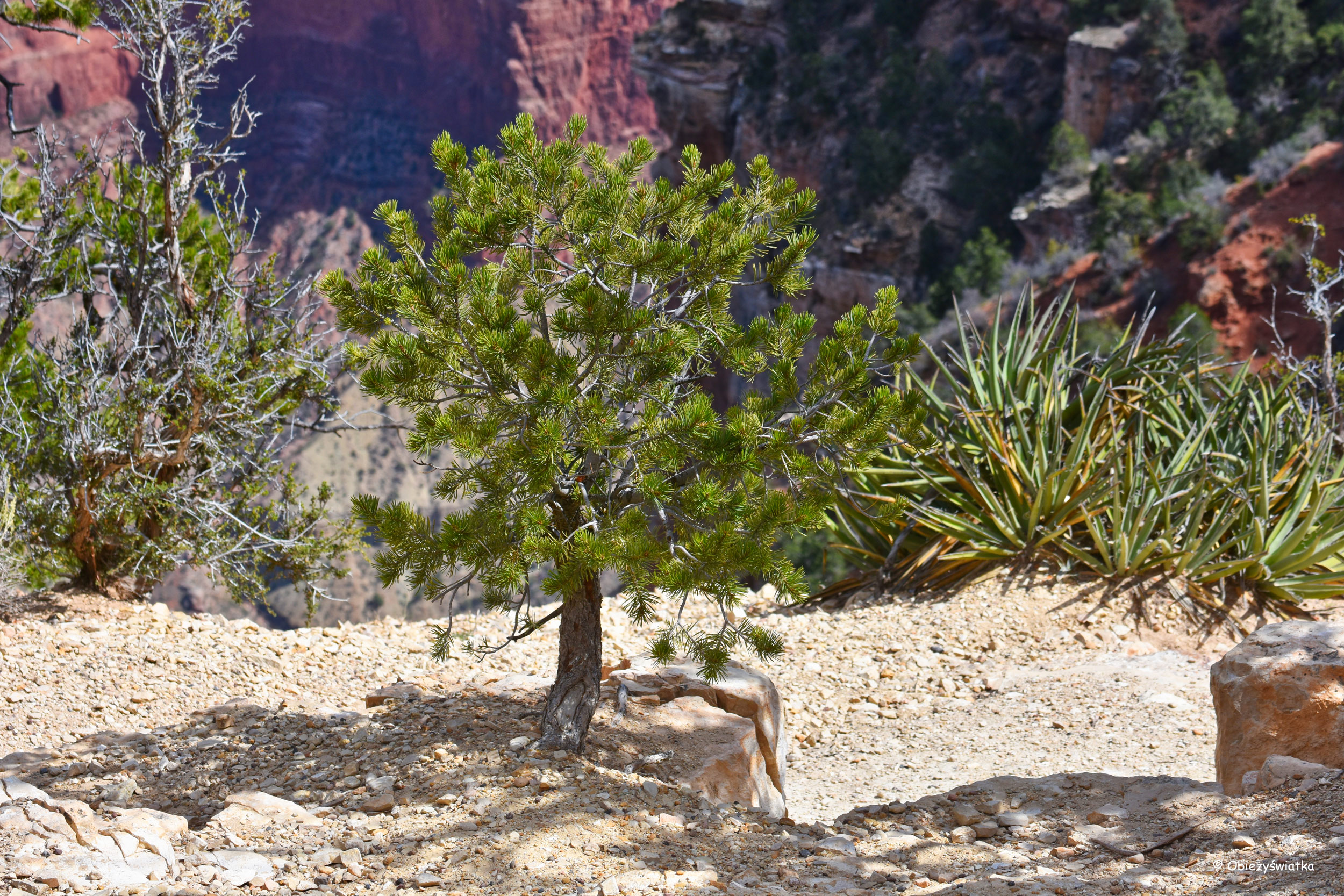Na jednym ze szlaków - Grand Canyon National Park, Arizona, USA
